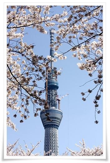 2011-04-13 小江戸~新河岸川~江戸 (20)