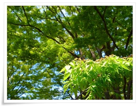 2011-04-20 川越水上公園 039