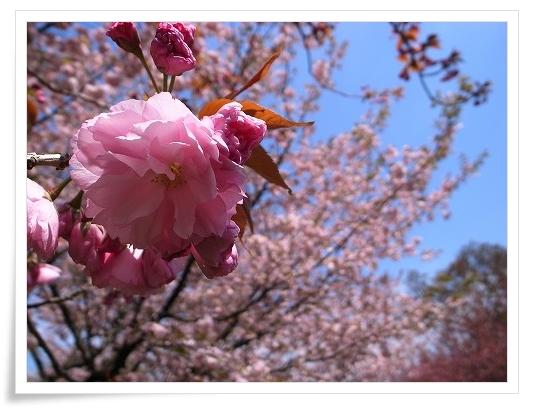 2011-04-20 川越水上公園 005