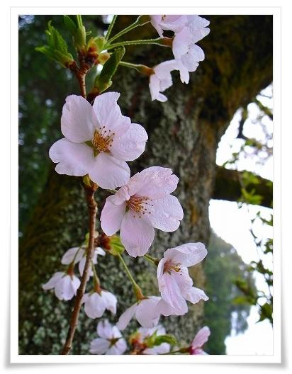 2011-04-21 奥武蔵グリーンライン 105