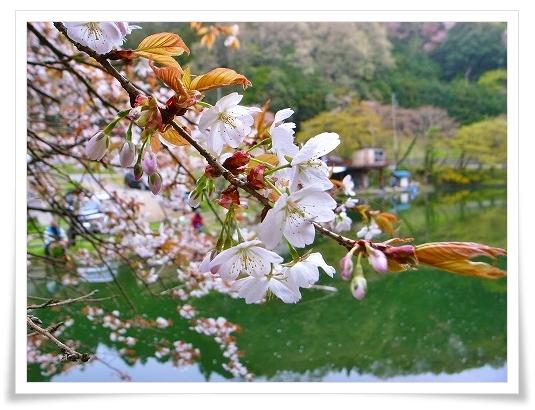 2011-04-21 奥武蔵グリーンライン 025