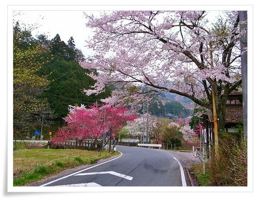 2011-04-21 奥武蔵グリーンライン 130