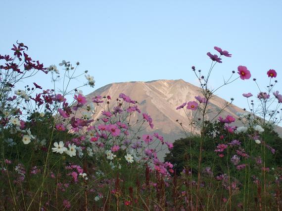 大山とコスモス