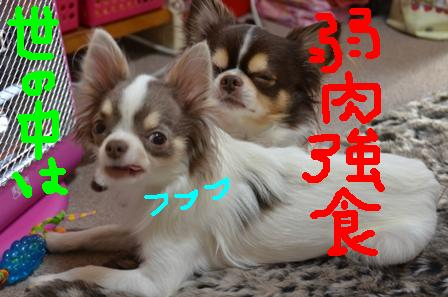 DSC_2952.jpg