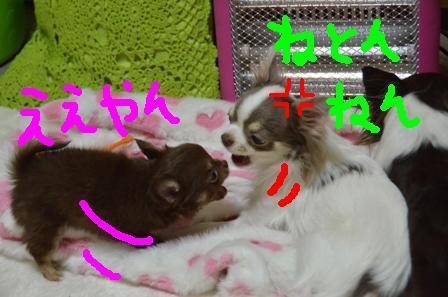 DSC_3518.jpg