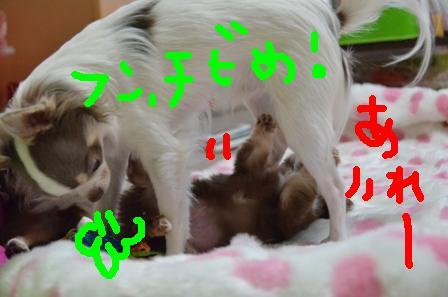DSC_3536.jpg