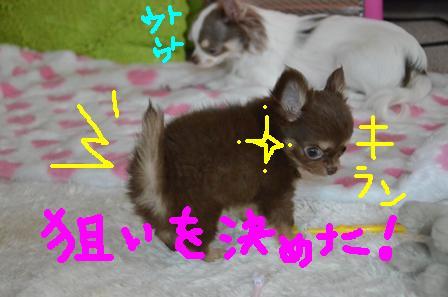 DSC_3603.jpg