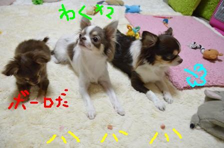 DSC_4145.jpg