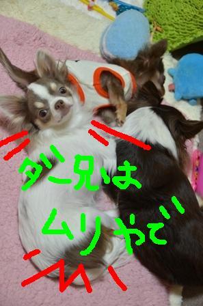DSC_4251.jpg