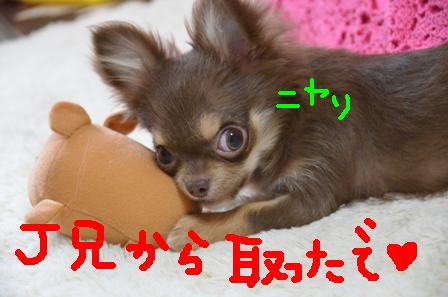 DSC_4497.jpg