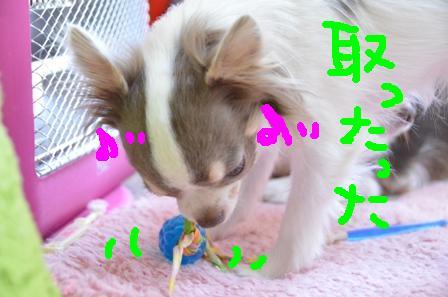 DSC_4525.jpg