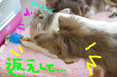DSC_4537.jpg