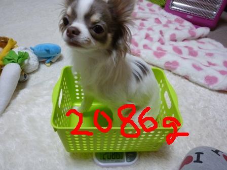 P1040251.jpg
