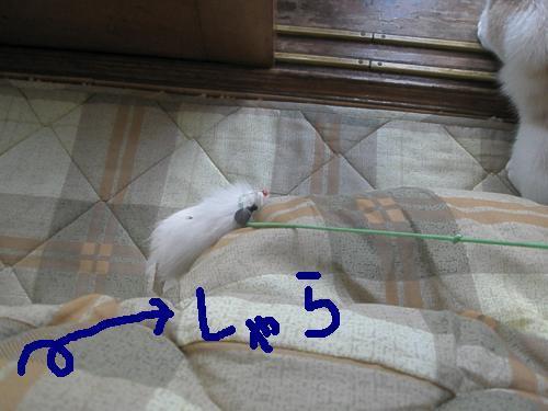 PB110012_convert_20081111161657_convert_20081111162956.jpg