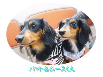 *バット&ムースくん*