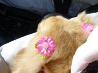 ピンクの耳飾はSherryとおそろです