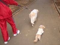 駒沢公園のお散歩