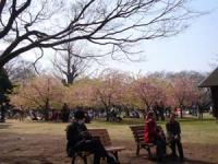 一角だけ咲いてる 桜