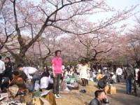 代々木公園のお花見