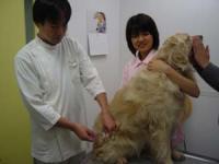 狂犬病の注射