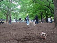 代々木公園のドッグラン