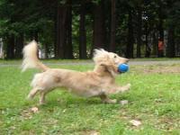 ボールで遊べるだけでいいんだよ