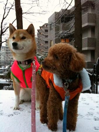 雪の朝の散歩夏春