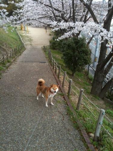桜となっちゃん