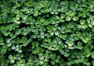 大宮の植物