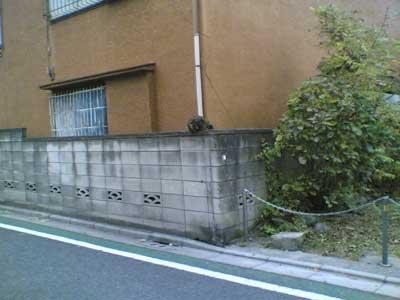 オキニー!5