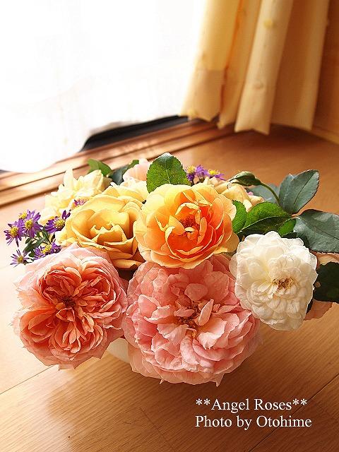 032お庭のバラ達