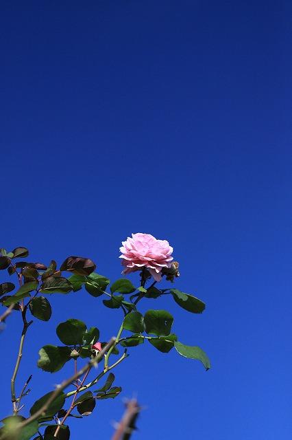 IMG_5833安曇野バラのお宅
