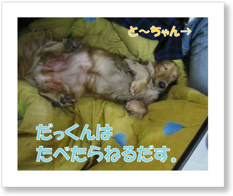dankichi-169.jpg