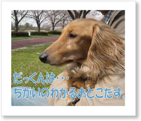 dankichi-211.jpg