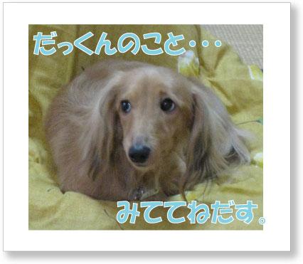 dankichi-239.jpg