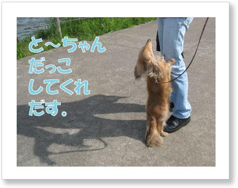 dankichi-256.jpg