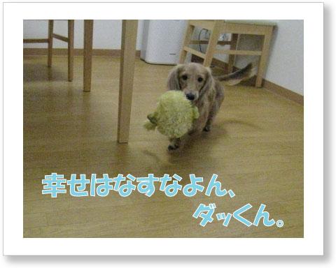 dankichi-260.jpg