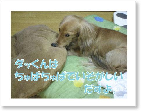 dankichi-261.jpg