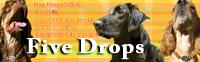 Five Drops