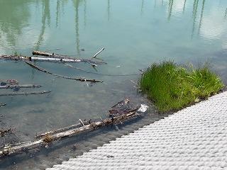 池の中に・・・