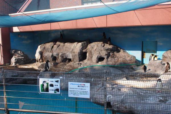 お隣りのペンギンの岩場。
