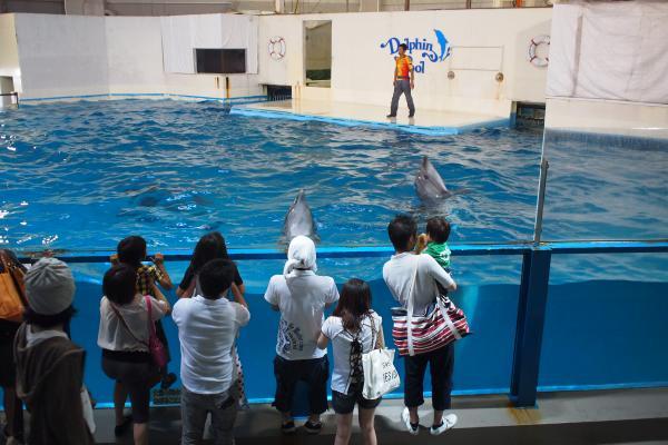 イルカ立ち泳ぎ
