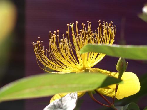 IMGP0546黄色い花2