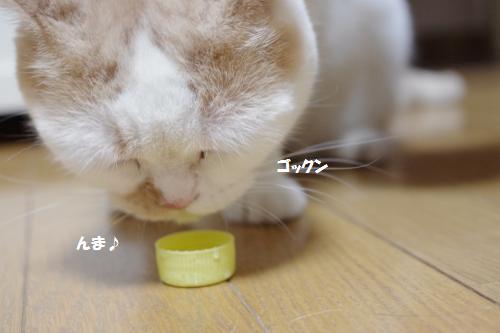 amami2.jpg
