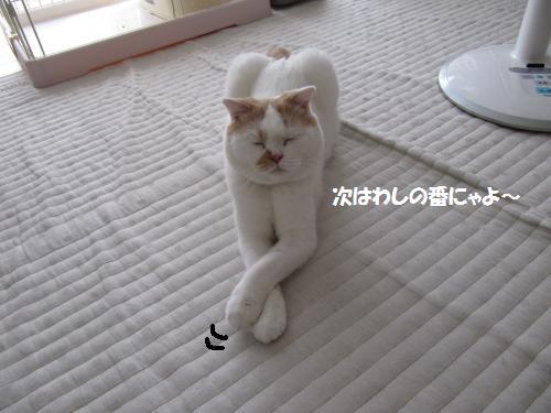 ashohu4c.jpg