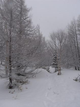 新雪の上を