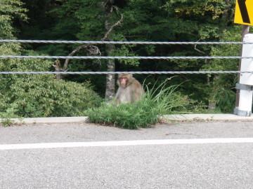 YAKUSHI2_15.jpg