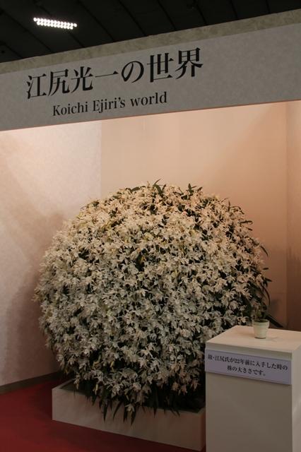 記念展示「江尻光一の世界」