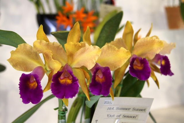 "Rlc.Hot Summer Sunset ""Out of Season"""