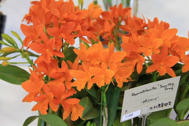 "Rth.Young Min Orange ""ORCHIS"""
